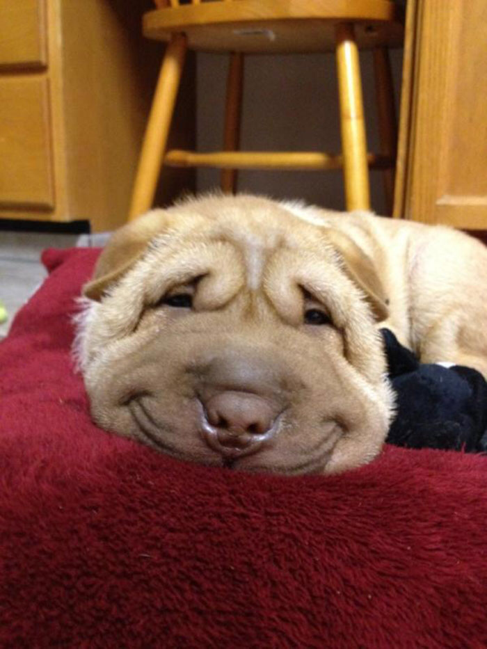 Smiling Puppy Dog